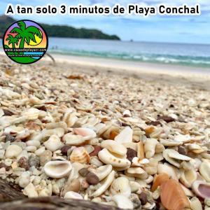 conchal
